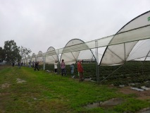 truskawki-np-12