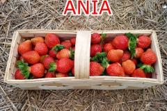 Ania-owoce-2