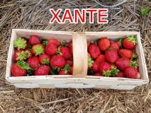 xante-owoce-2