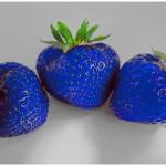 niebieskie truskawki